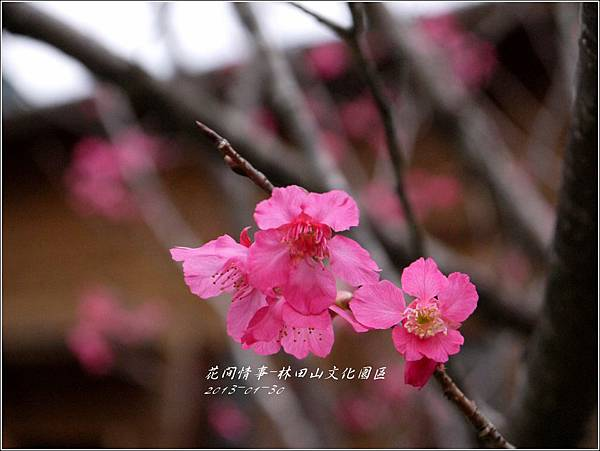 2013-01-林田山文化園區25
