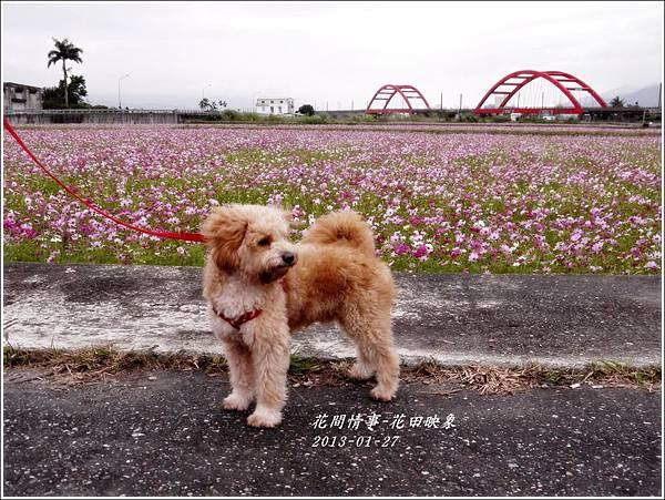 2013-01-花田映象8