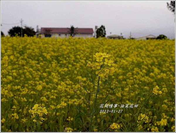 2013-01-花田映象26
