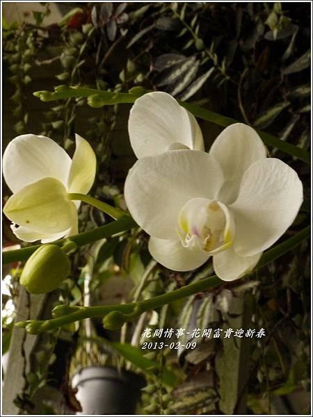 2013-02-迎新春11