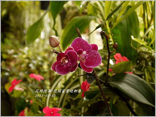 2013-02-迎新春6