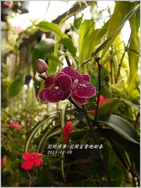 2013-02-迎新春10