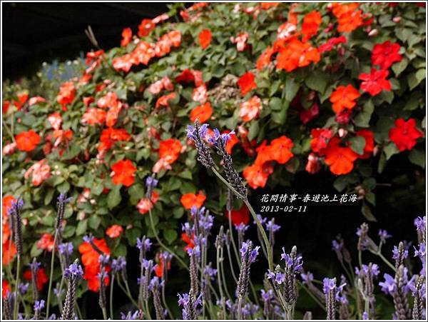 2013-02-池上花海15