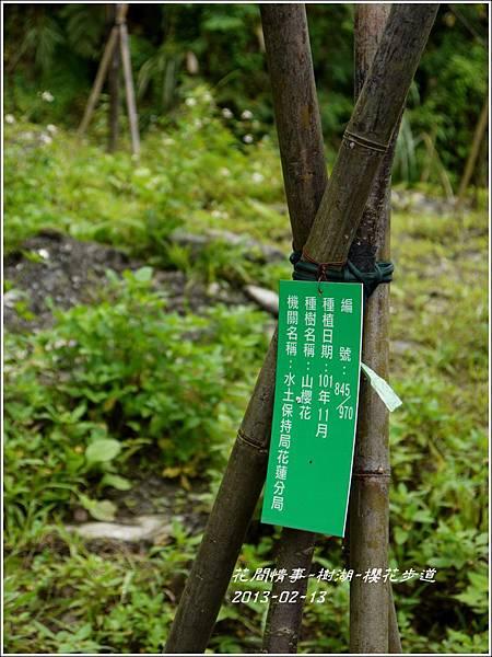 2013-02-樹湖-櫻花步道20