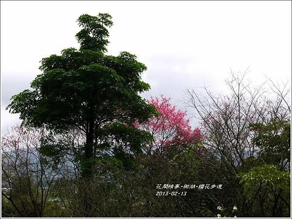 2013-02-樹湖-櫻花步道2