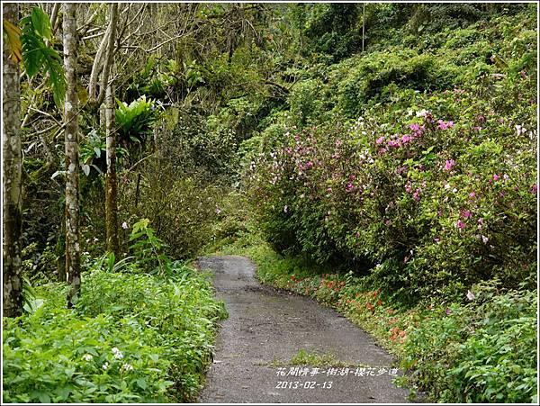 2013-02-樹湖-櫻花步道5