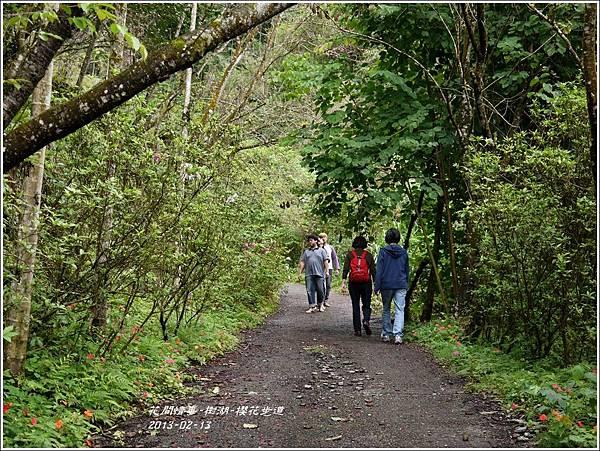 2013-02-樹湖-櫻花步道7
