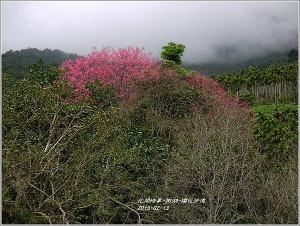 2013-02-樹湖-櫻花步道19