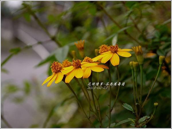2013-02-芬香萬壽菊5