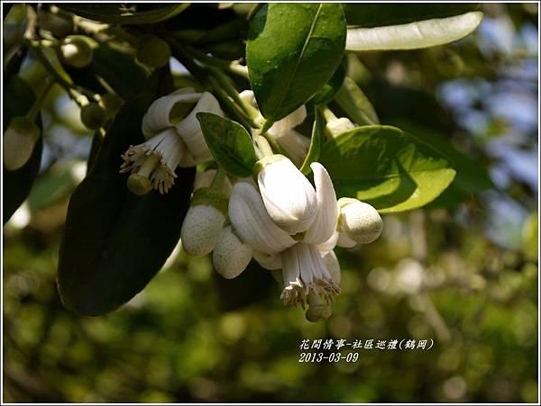 2013-03-鶴岡社區巡禮16