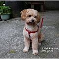 2013-03-毛小孩小Q3