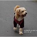 2013-03-毛小孩小Q8