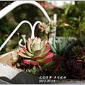 2013-03-多肉植物1