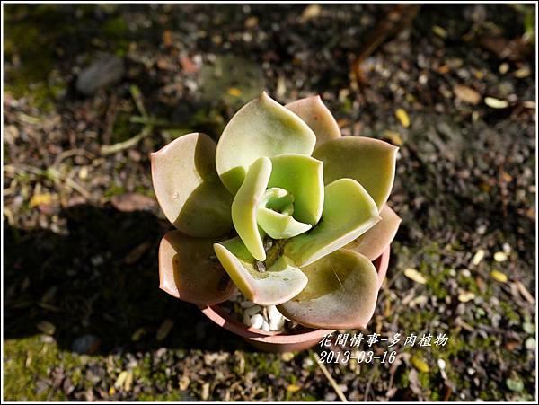 2013-03-多肉植物3