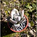 2013-03-多肉植物4