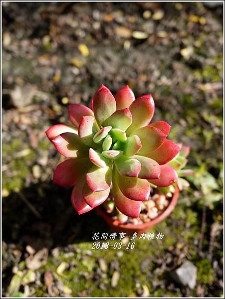 2013-03-多肉植物6