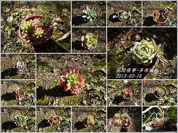 2013-03-多肉植物8