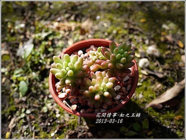 2013-03-虹之玉錦