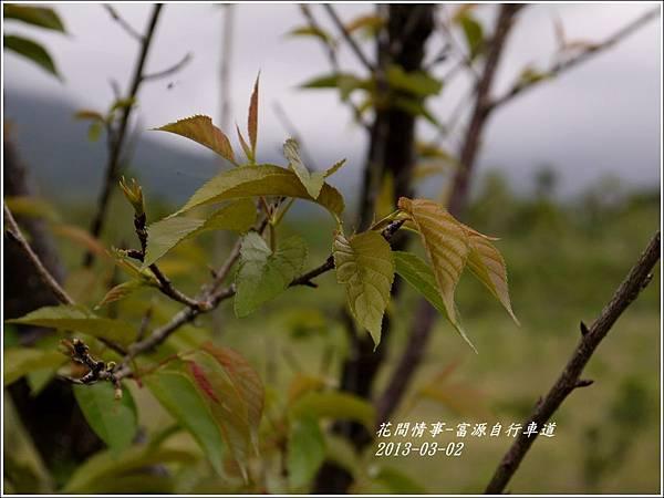2012-03-富源自行車道3