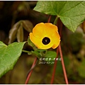 2013-04-黑眼花2