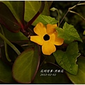 2013-04-黑眼花3