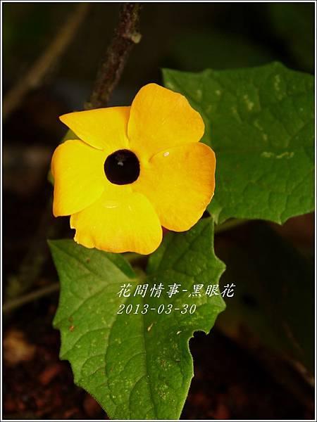 2013-04-黑眼花5