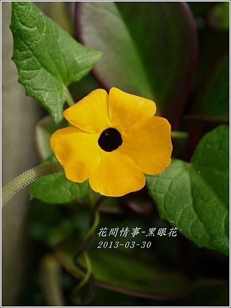 2013-04-黑眼花7