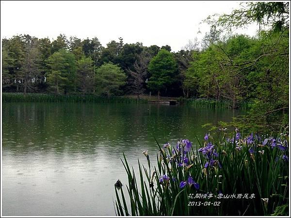 2013-04-雲水山鳶尾季10