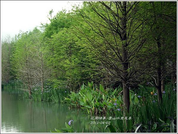 2013-04-雲水山鳶尾季19