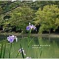 2013-04-雲水山鳶尾季23