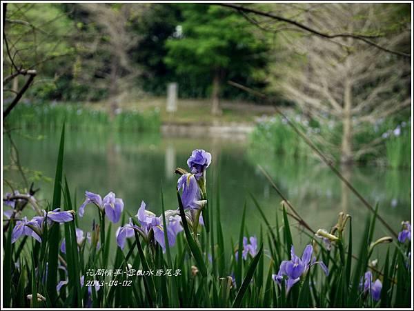 2013-04-雲水山鳶尾季29
