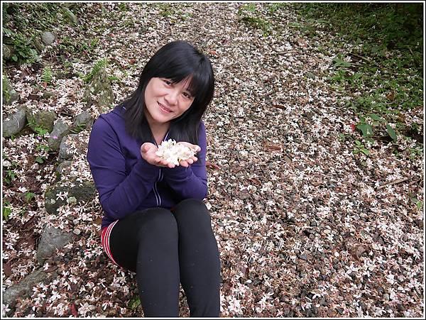 2013-04-油桐花6