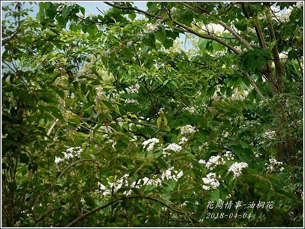 2013-04-油桐花13