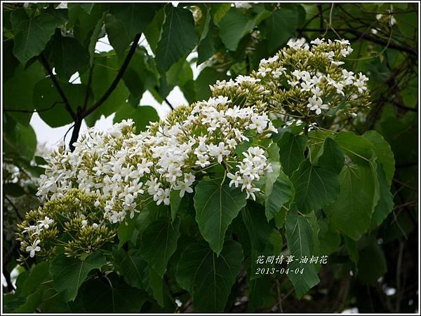 2013-04-油桐花19