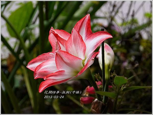 2013-04-孤挺(千禧)3