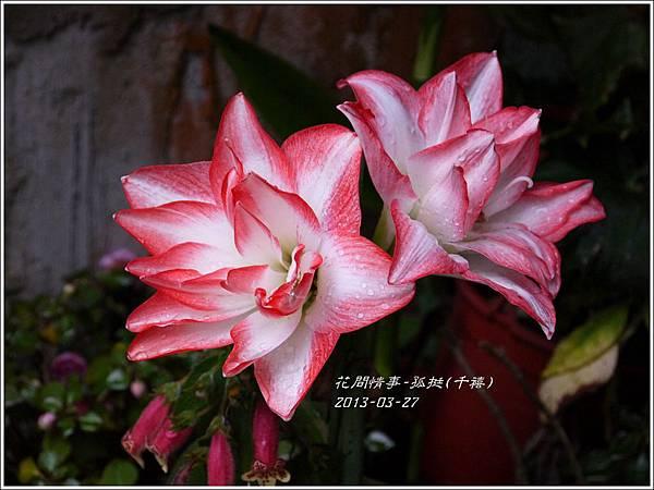 2013-04-孤挺(千禧)4