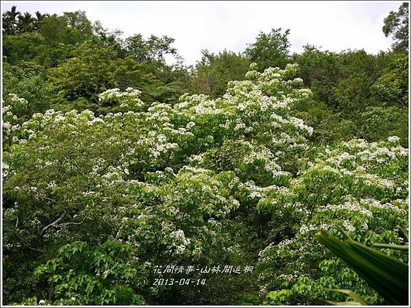 2014-04-出林間追桐6