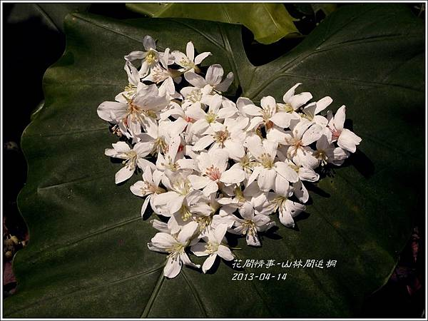 2014-04-出林間追桐10