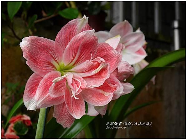 2013-04-孤挺(玫瑰花漾)1