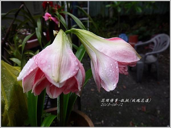 2013-04-孤挺(玫瑰花漾)3