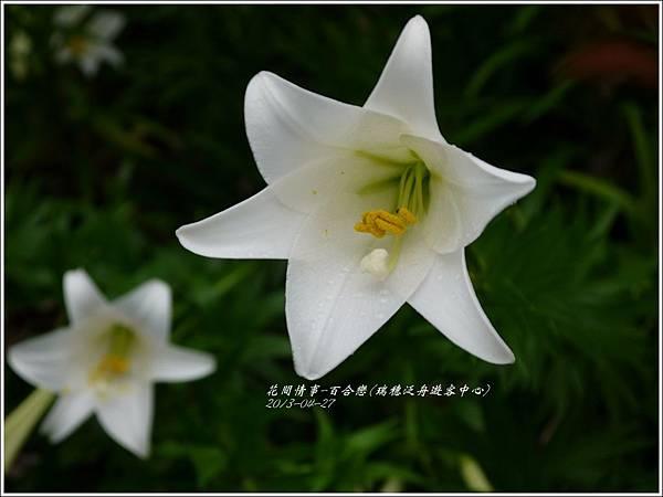 2013-04-百合戀(瑞穗泛舟遊客中心)8