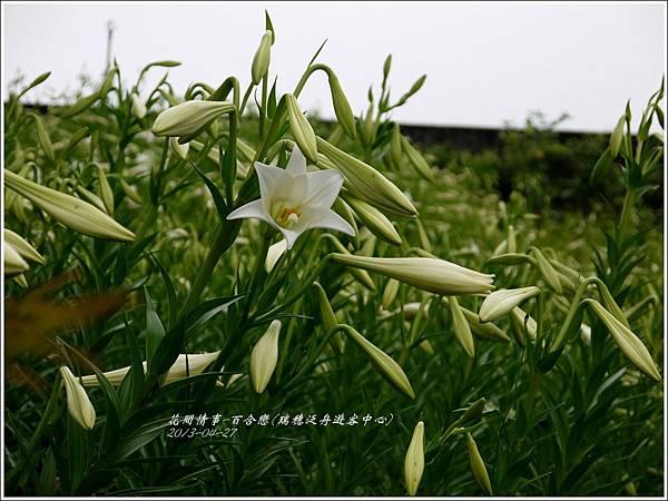 2013-04-百合戀(瑞穗泛舟遊客中心)12