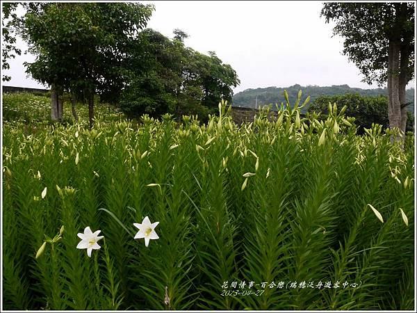 2013-04-百合戀(瑞穗泛舟遊客中心)15