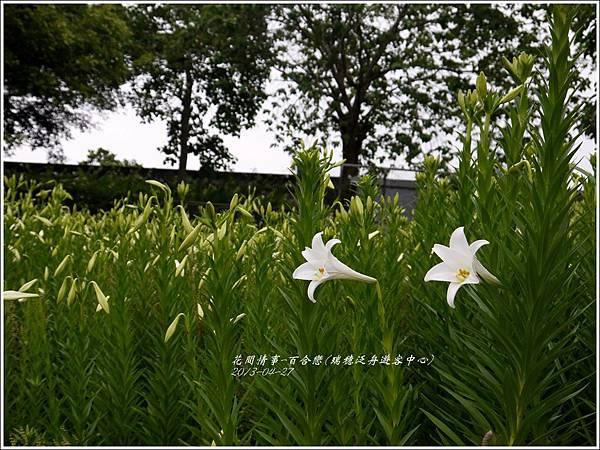 2013-04-百合戀(瑞穗泛舟遊客中心)17
