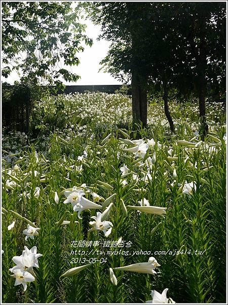2013-05-百合戀(瑞穗泛舟遊客中心)5