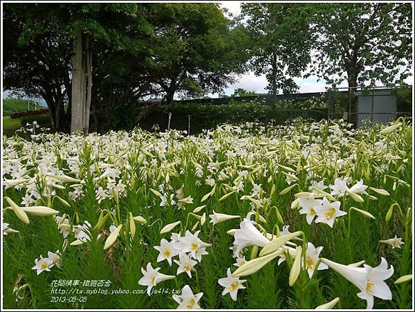 2013-05-百合戀(瑞穗泛舟遊客中心)17