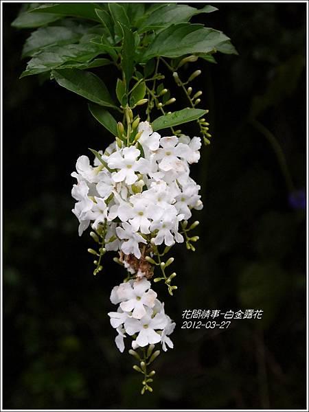 2013-05-白金露花2
