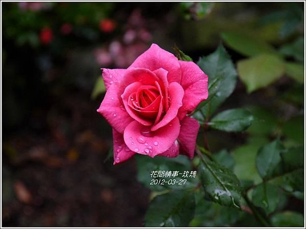 2013-05-玫瑰2
