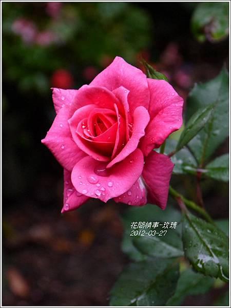 2013-05-玫瑰1