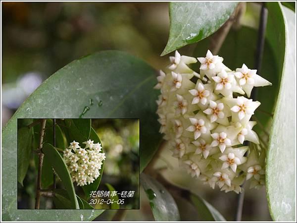 2013-05-毬蘭1